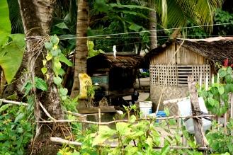 Malupascua houses